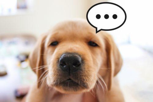 ご不満な様子の子犬